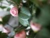 SP Plante
